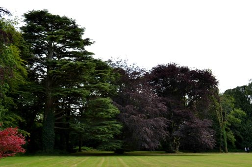 Newtownbarry Gardens - Trees