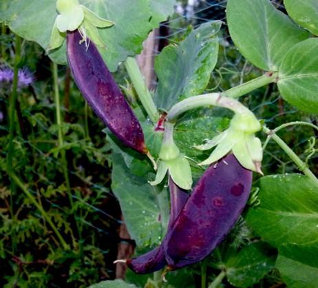 Grow Your Own Food on a balcony garden