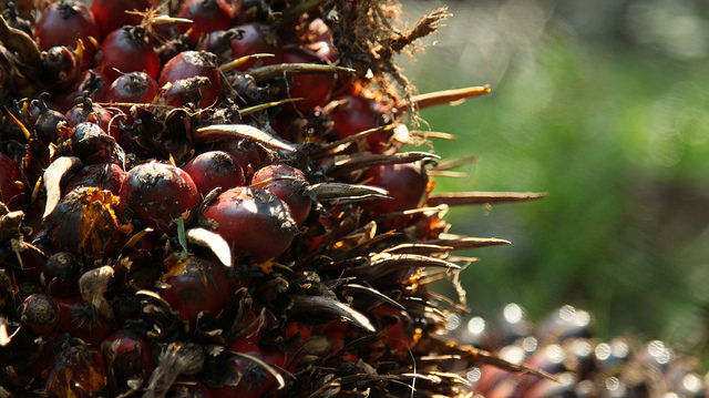 The Truth About Palm Oil. What You Need To Know