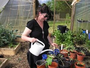 Watering Vegetable Plants and Seedlings