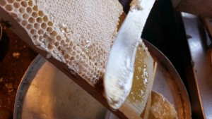 Honey bee feeds from a dandelion flower in springtime by greensideup.ie