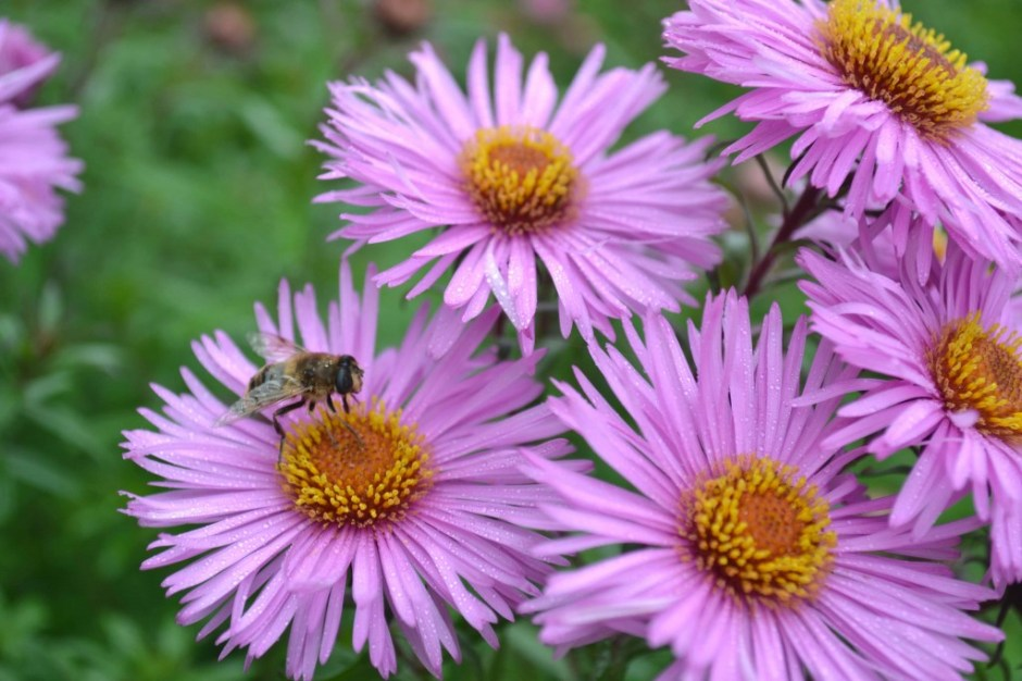 Blooming Flowers at Mount Congreve during Late September