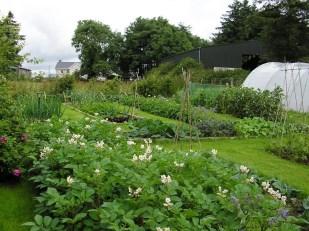 10 Tips to Create a Budget Vegetable Garden