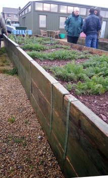 high raised beds