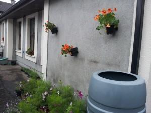 nasturtiums in Breezy Garden pots