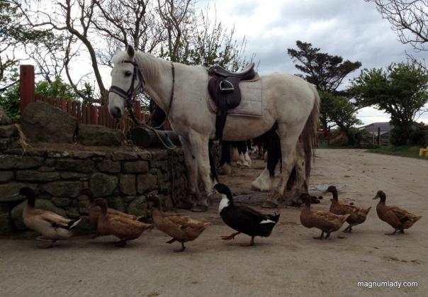 Sligo Horseriding