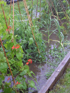Waterlogged Vegetable Garden
