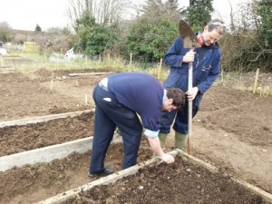 Sowing potatoes at Kilkenny Allotments and Community Gardens