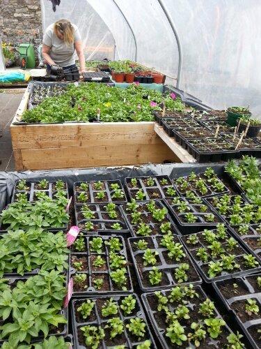 Goresbridge Community Garden