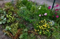 Gravel garden holding its own in September | Green spaces ...