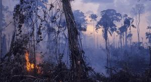 Согласно исследованию, вырубка лесов способствует вспышкам болезней