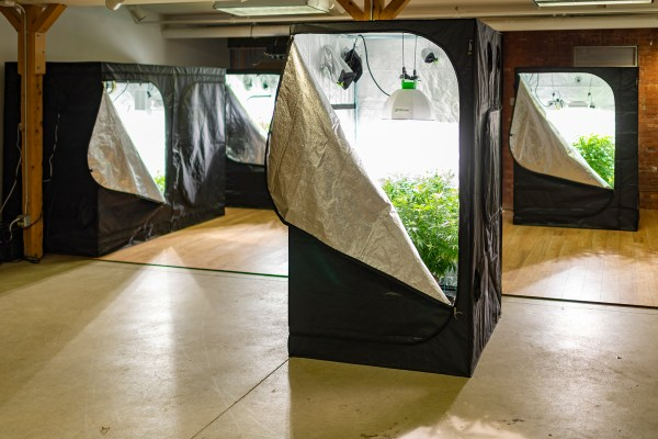 Collection of lit grow tents