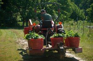 set up your organic garden