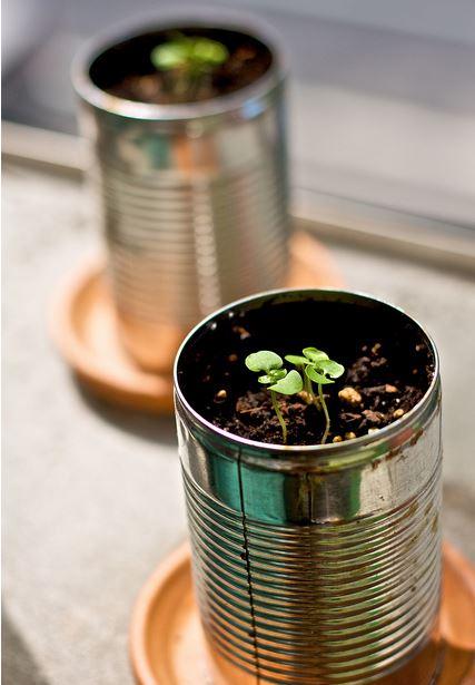 Indoor organic gardening