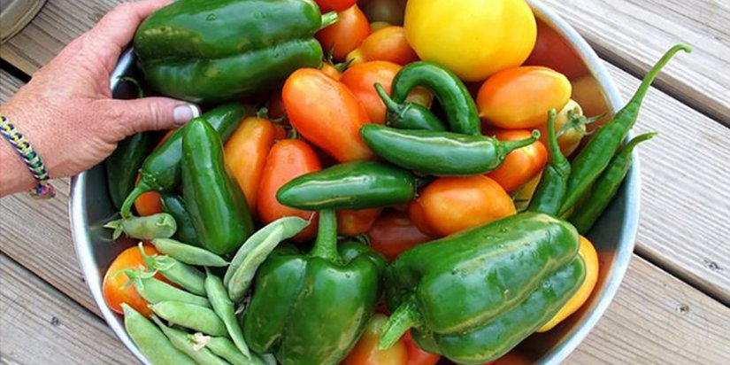 Tips on producing a better harvest