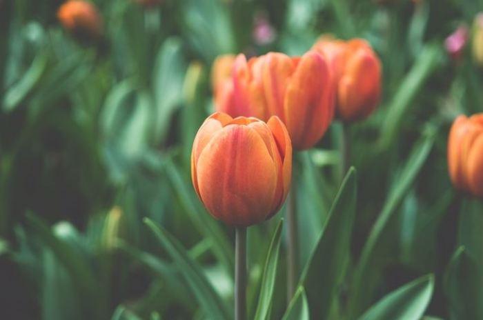 eco-friendly-garden