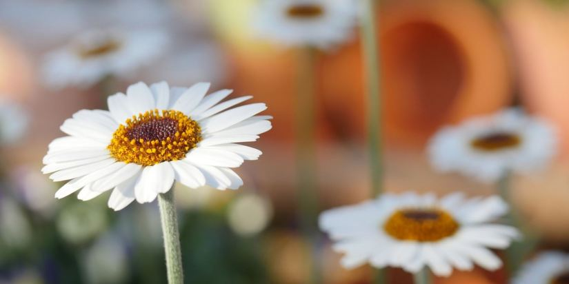 How Do Your Gardening Habits Affect The Environment?
