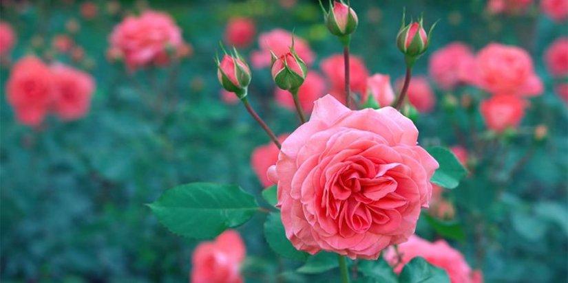 Make your garden look expensive