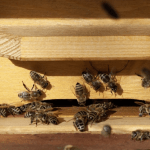 Why You Should Keep Bee House