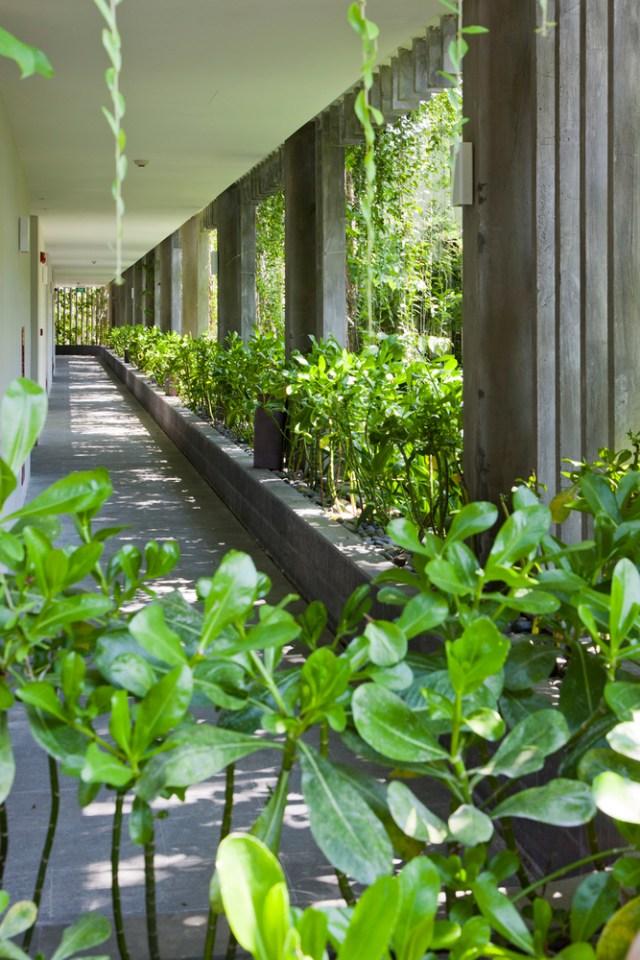Vista de um corredor, com jardineiras no perímetro e trepadeiras que bloqueiam os raios solares. (Fonte: Archdaily).