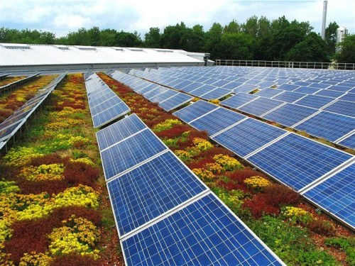 """O """"casamento"""" entre placas fotovoltaicas e telhado verde. (Fonte: Instituto Cidade Jardim)."""