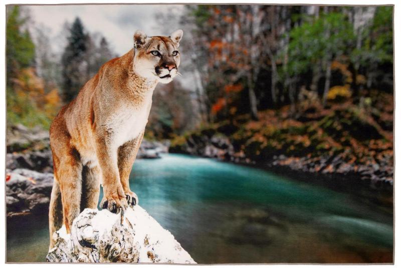 G8015-16 Cougar