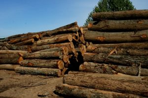 Green Tree Forest Products | Just another WordPress site