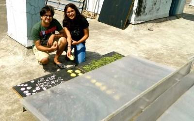Maharashtra Farmer Vaibhav Tidke Develops Innovative Solar Dryer