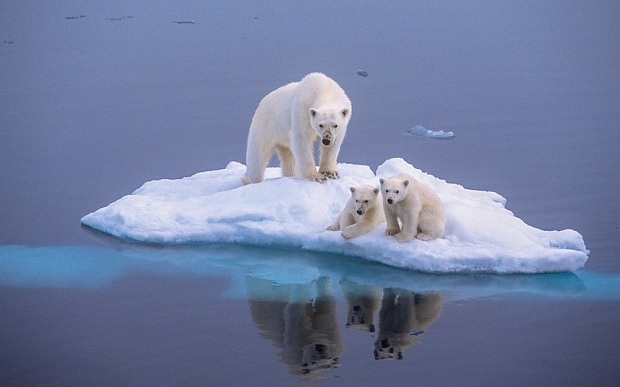 How Climate Change Imagery Has Changed From Polar Bears to People