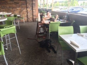 fresh to order restaurant review dog friendly cane corso puppy greenville sc training.jpg