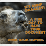 notary-camel-hump-day