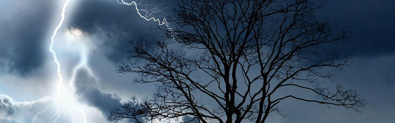 lightning hitting tree - need insurance