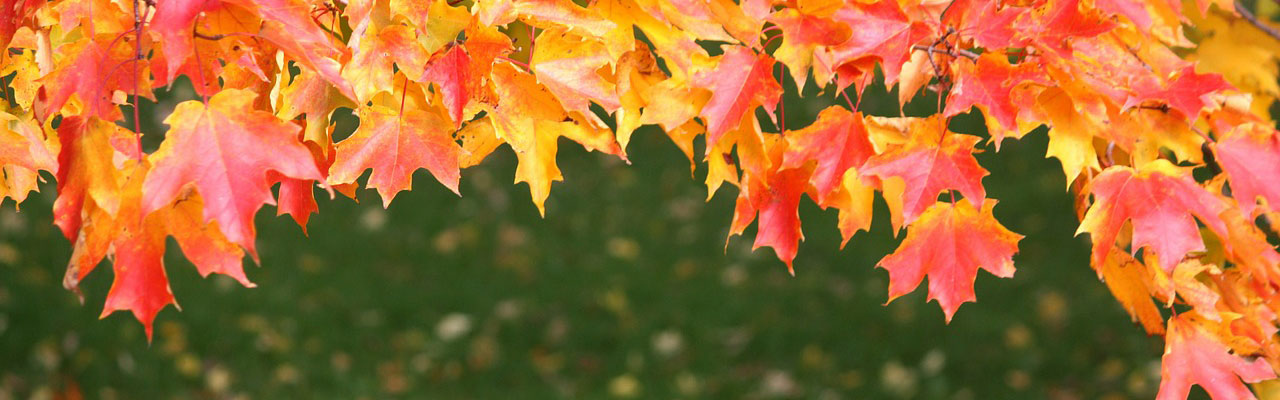 fall tree care tips northern virginia