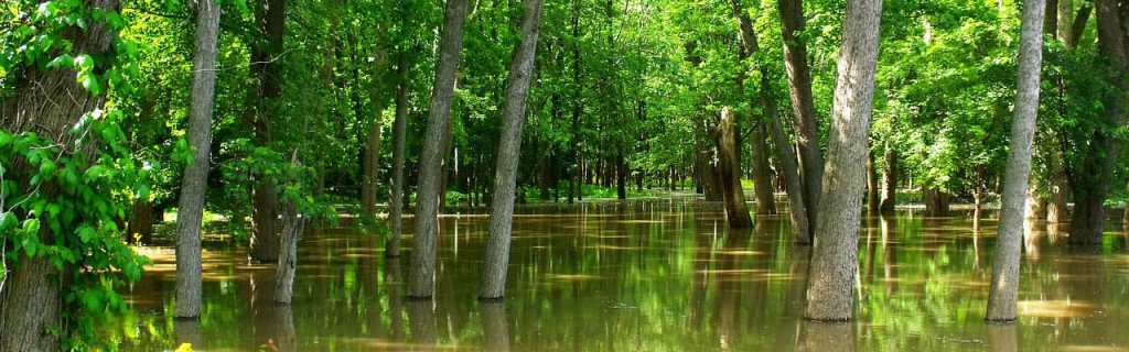 flooded trees in standing water after a storm