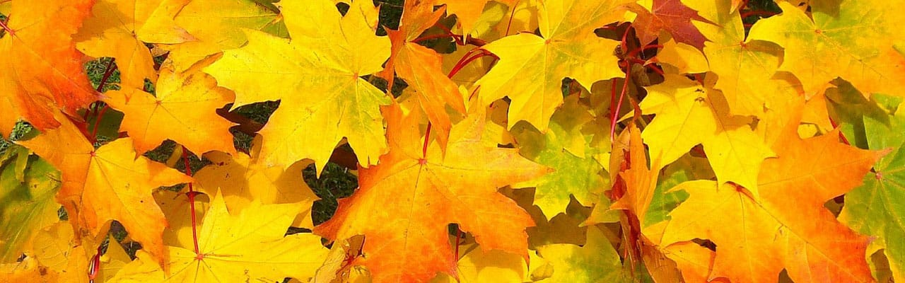 leaves change color in fall