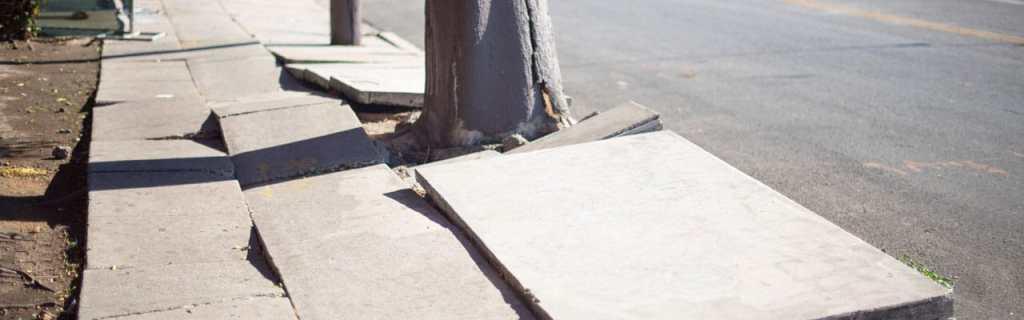 tree roots lifting concrete sidewalk slabs