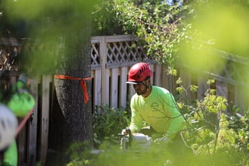 tree removal - cutting