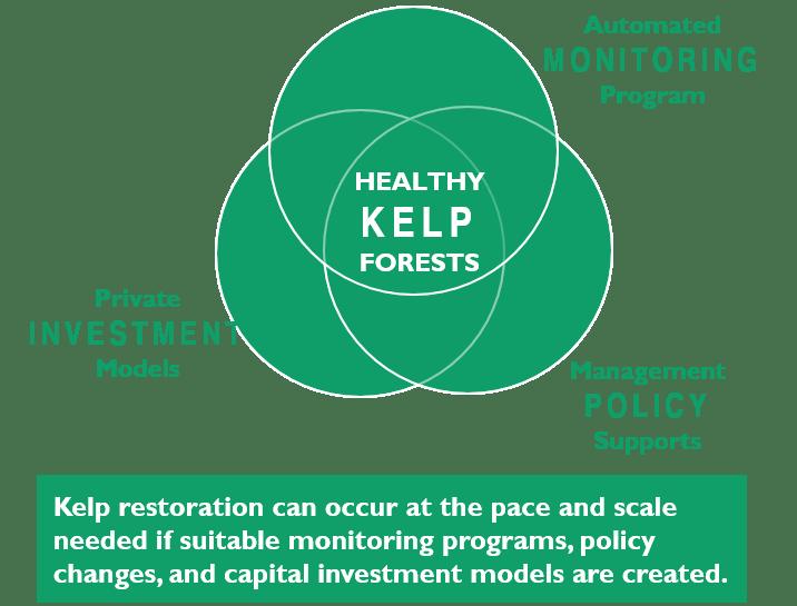 Kelp-3Part