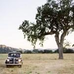 car-under-tree