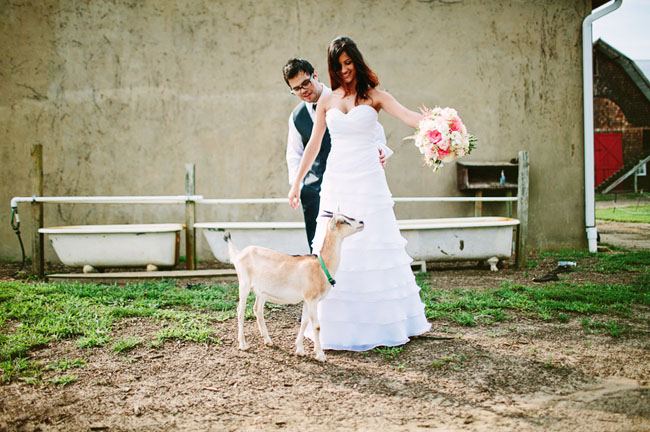 bride and groom with goat