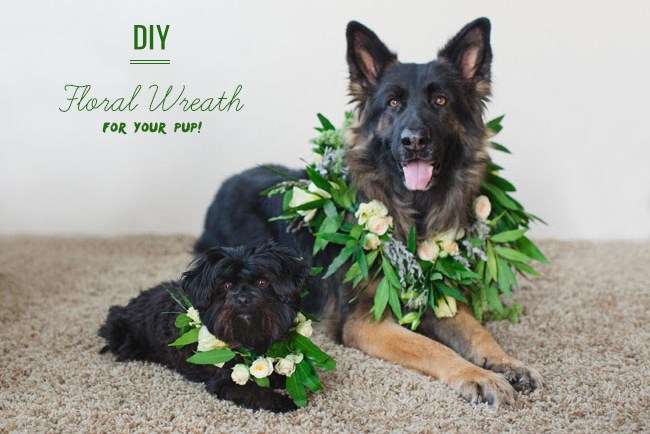 DIY Floral Wreath for your dog
