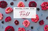 Seasonal Flower Guide: Fall Flowers