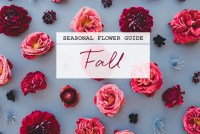 Seasonal Flower Guide: Fall Flowers