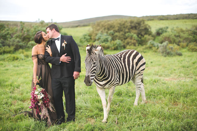 African Zebra Anniversary