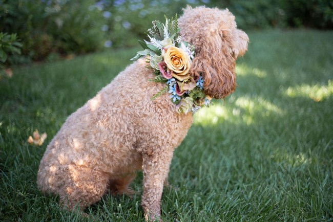 DIY Floral Dog Collar