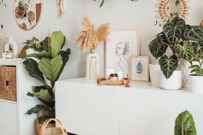 indoor plants boho home
