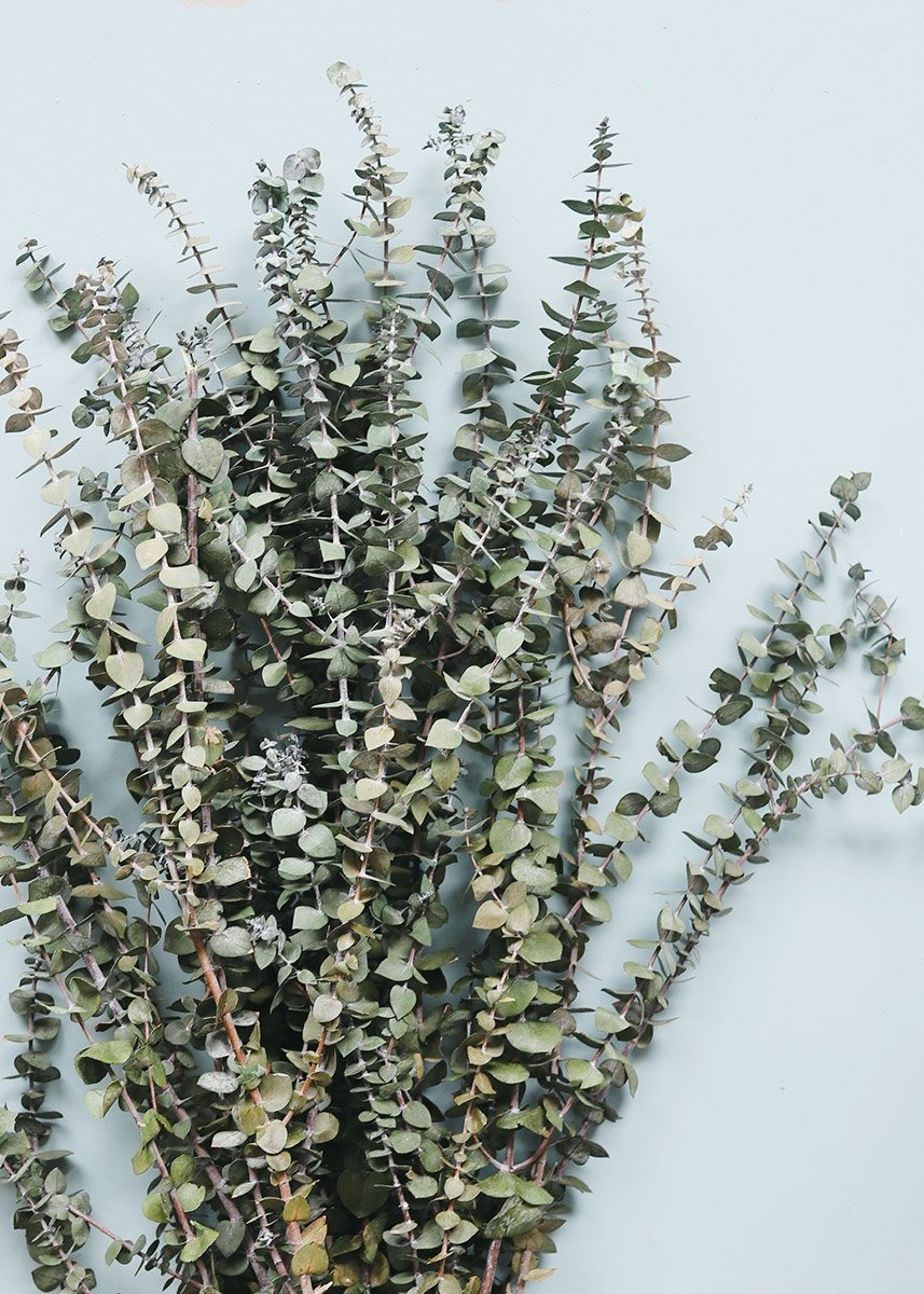 eucalyptus dried flowers bouquet from Afloral that you can buy online