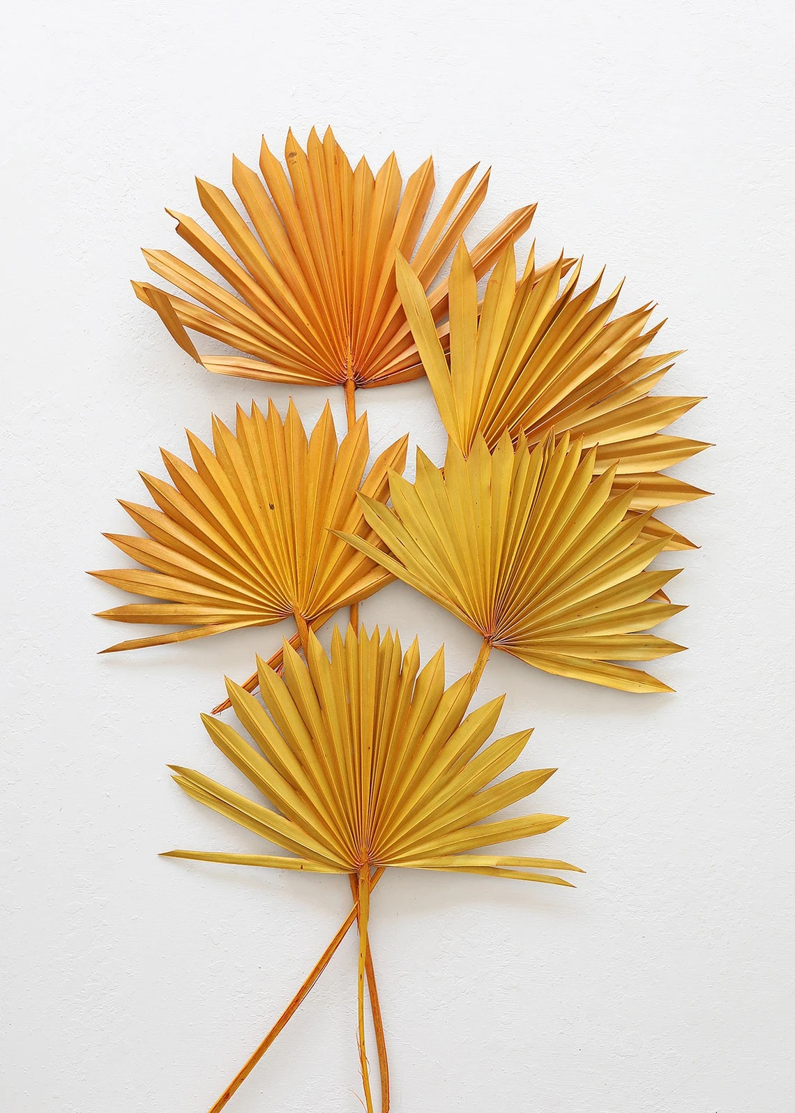 Afloral sunset sun palm dried flowers set of 5 that you can buy online