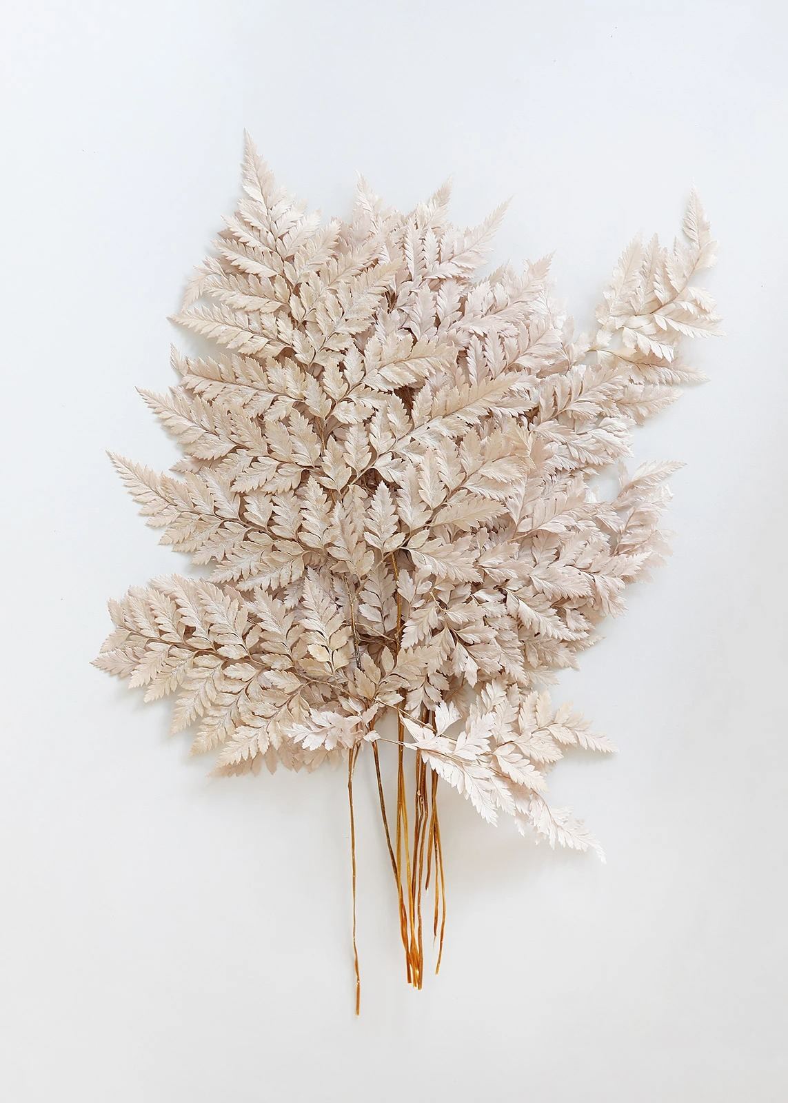 blush taupe fern dried flowers bundle from Afloral that you can buy online