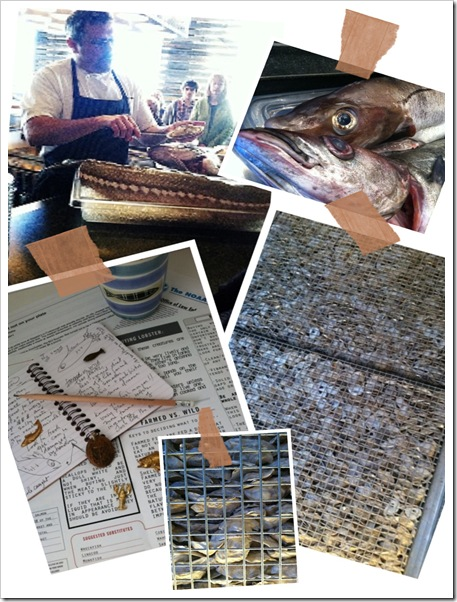 fish school collage